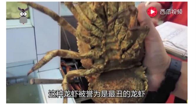 """去柬埔寨旅游,花60元买了5只""""拖鞋""""龙虾,感觉是超值..."""