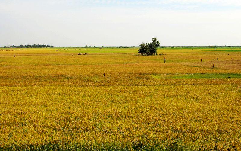 黄文光:在田间地头教汉语的农业机械师