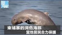 柬埔寨的濒危海豚,当地居民合力保护